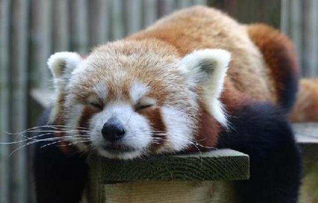 Firefox Lento?
